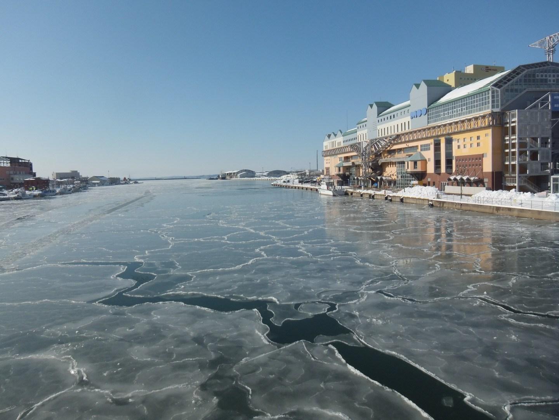 釧路川河口の蓮の葉氷
