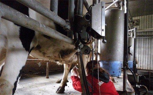 20-85 牧場体験 ミルクジャムセット付