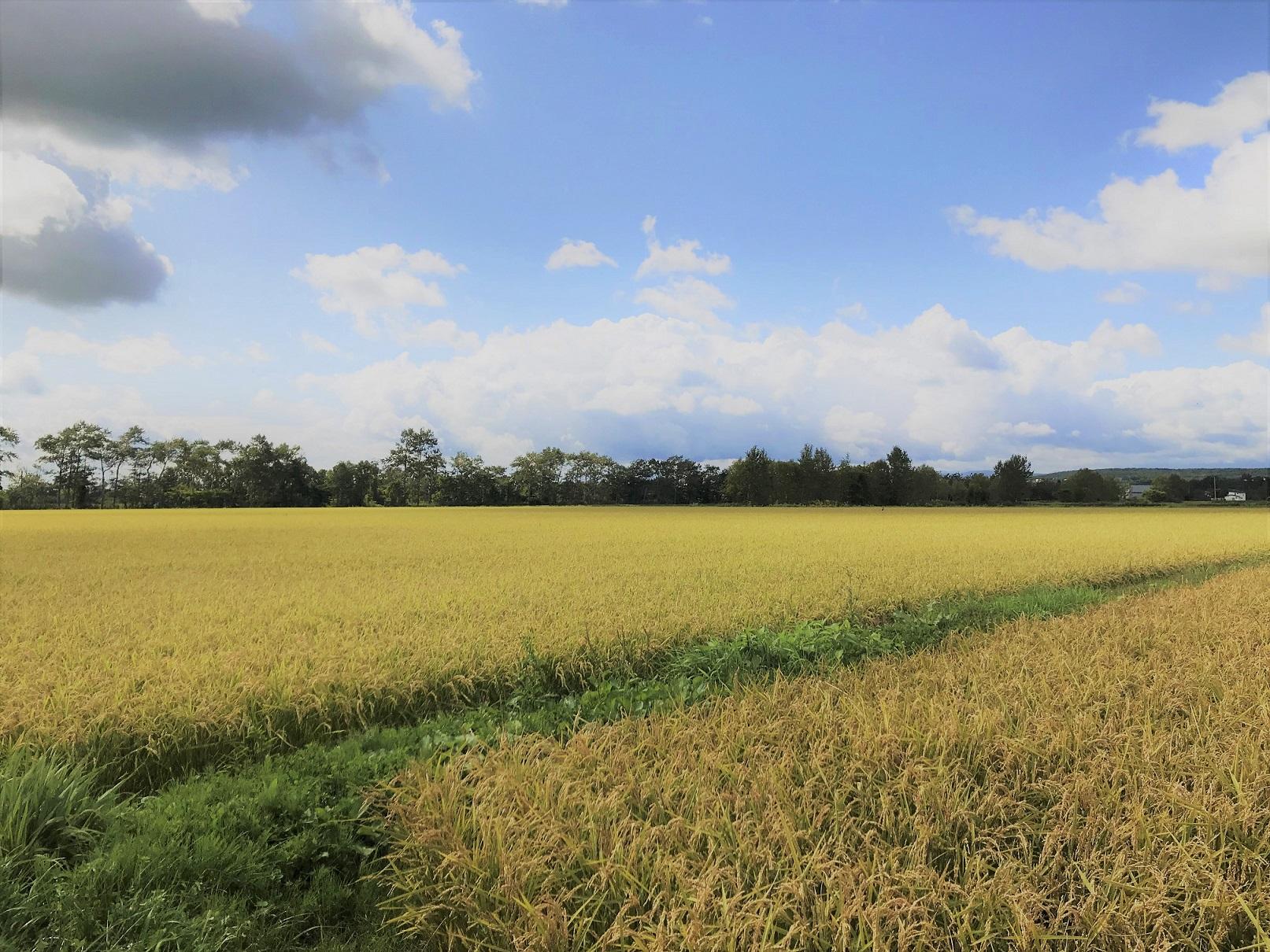 ひとの力は、少しだけ。自然が育むお米のおいしさ。