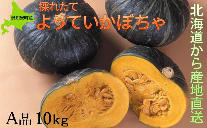 ようていかぼちゃA品10kg≪北海道倶知安産≫
