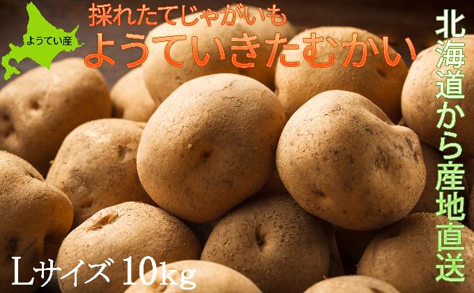 ようていじゃがいも【きたかむい】Lサイズ10kg≪北海道ようてい産≫