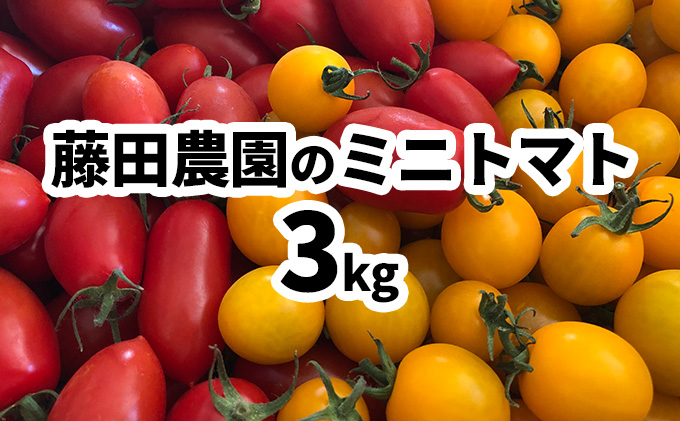 藤田農園のミニトマト食べ比べセット約3kg☆農園からのおすそ分け野菜付☆