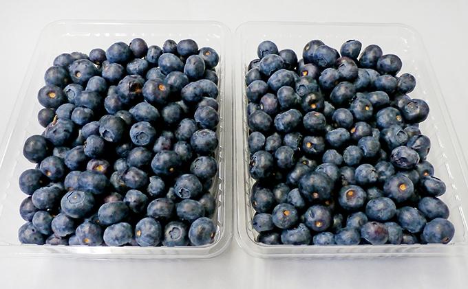 <仁木ファーム>北海道仁木町産冷凍ブルーベリー約1kg