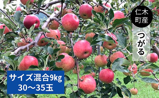 仁木町の採れたてりんご「つがる」9kg≪妹尾観光農園≫