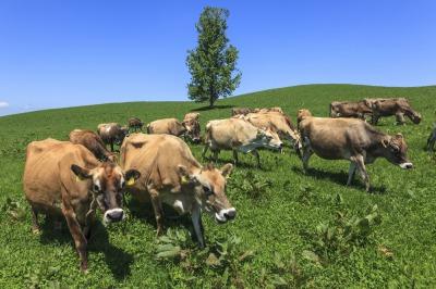 [015-41]美瑛放牧酪農場Cセット