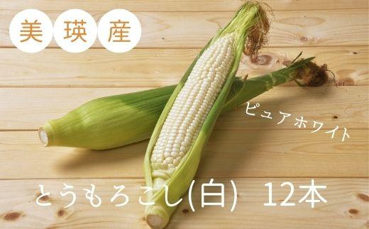 [010-137]株式会社 おおとり 美瑛産とうもろこし(白)12本