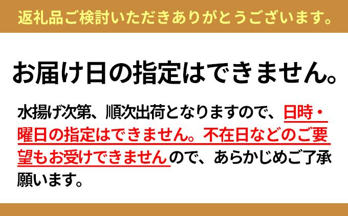 【配送日時・曜日指定不可】小川商店の無添加塩水ウニ100g×4パック