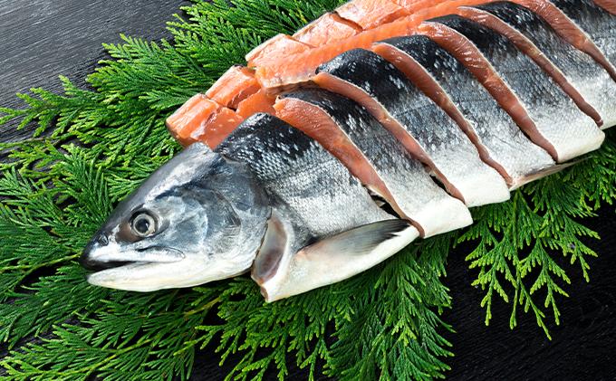 噴火湾産低温熟成新巻鮭切り身 約2.4kg 16切入