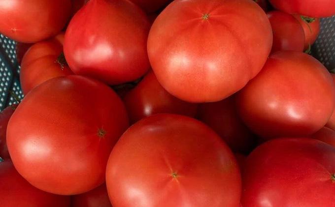 洞爺湖の新鮮野菜「桃太郎トマト」約4kg以上(24~18玉)