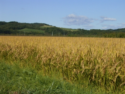 特別栽培米 アポイ米(ななつぼし)10kg