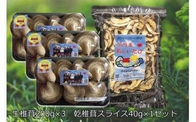 143.摩周産 菌床生しいたけ・乾燥しいたけセット(生200g×3パック、乾燥40g×1袋)