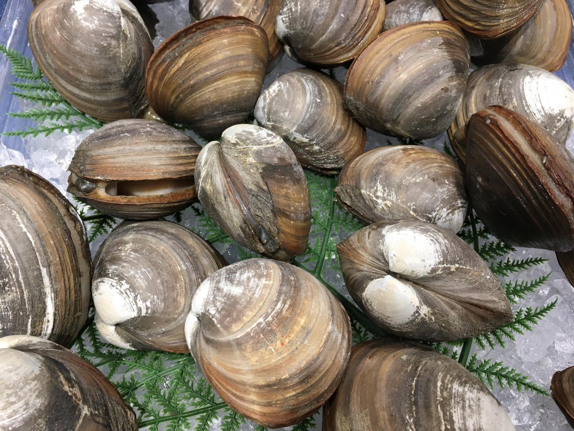 天然ボイルほっき貝 1kg(500g×2箱) 北海道野付産【漁協から直送】