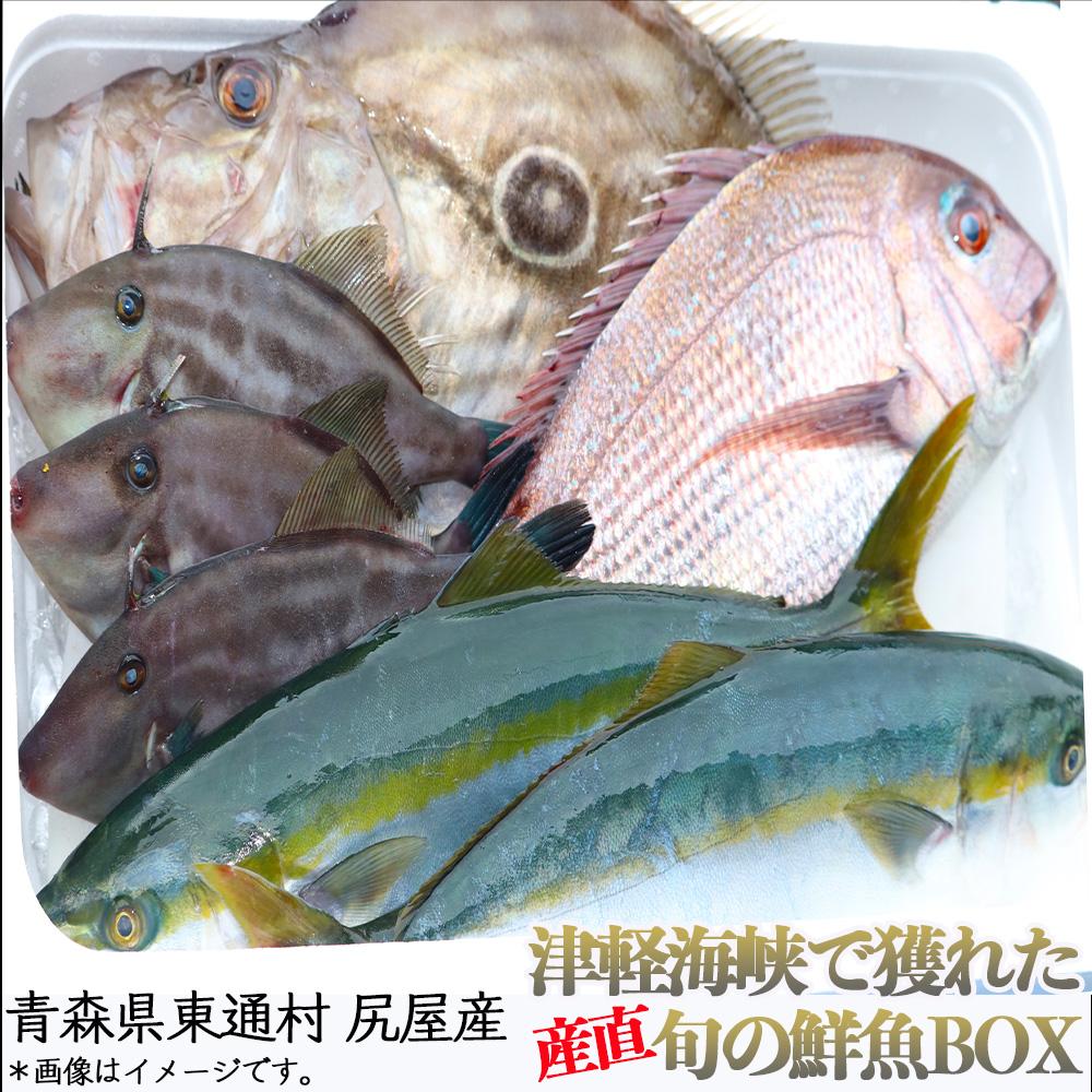 【A-35】尻屋産旬の鮮魚BOX
