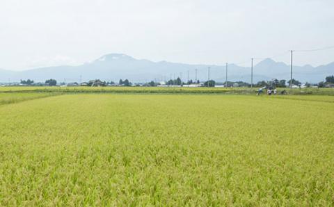 令和2年度産 岩手県矢巾町「ひとめぼれ玄米」2合×6袋 キューブ米