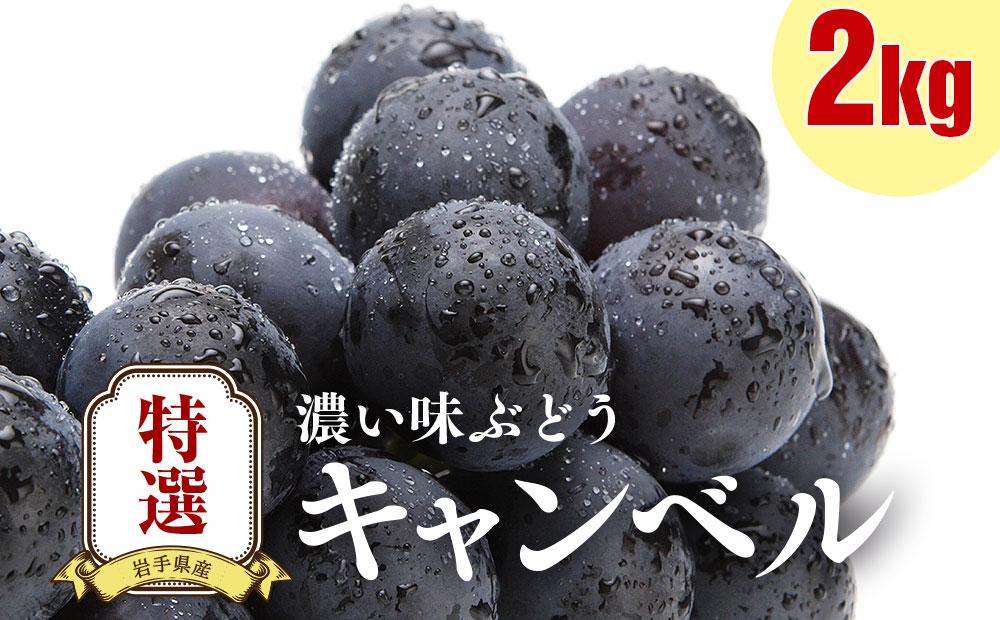 特撰 濃い味ぶどう【キャンベル】2kg