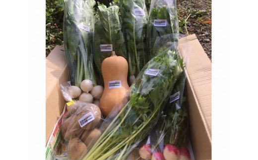【04324-0017】季節の自然栽培野菜のセット