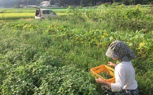 【04324-0123】<3か月定期便>季節の自然栽培野菜のセット