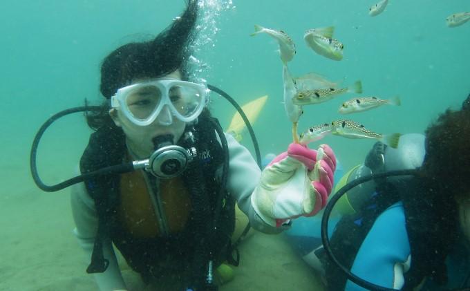【なまはげの海でダイビング!!】 海洋体験ビーチダイビング 2名様