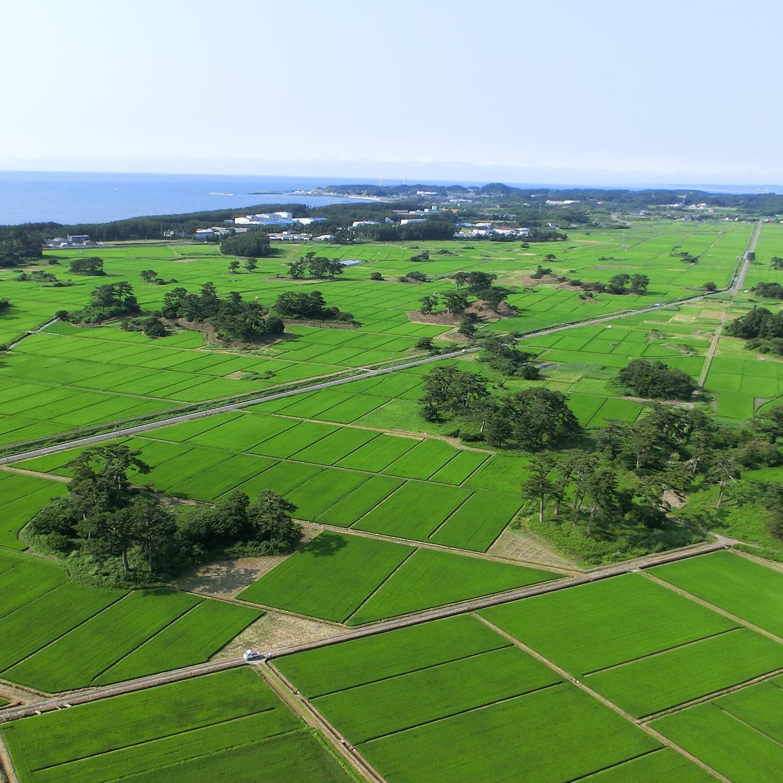日本海と水田