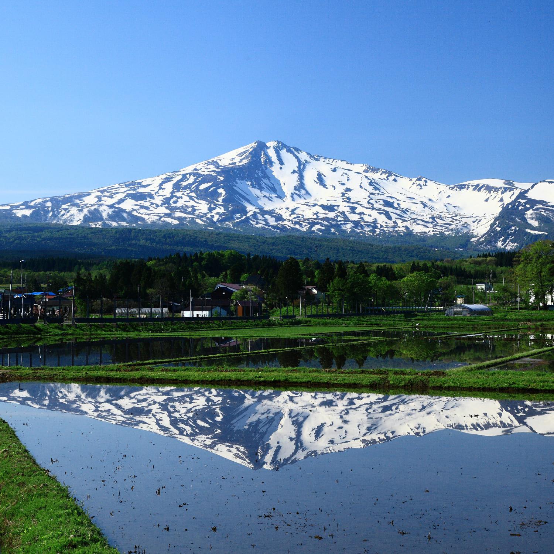 水田に映える鳥海山