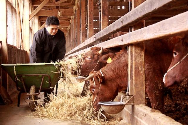 【希少】小国の国産短角牛 ソーセージセット (大4本×2パック、小4本×1パック)