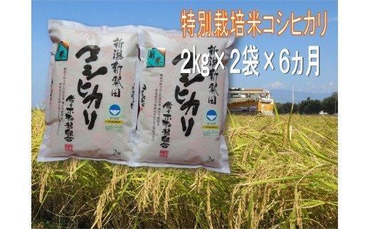 D19【令和2年産】(定期便)特別栽培米コシヒカリ 2㎏×2袋×6ヵ月(新潟県新発田市産)