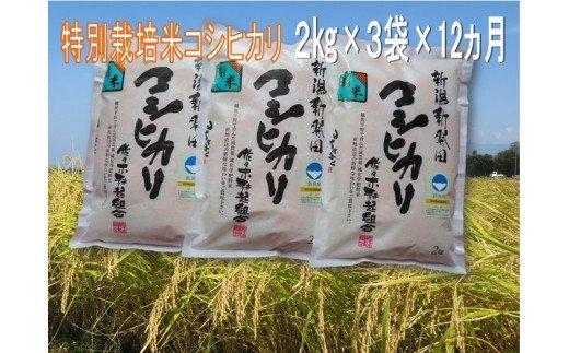 D22【令和2年産】(定期便)特別栽培米コシヒカリ 2㎏×3袋×12ヵ月(新潟県新発田市産)