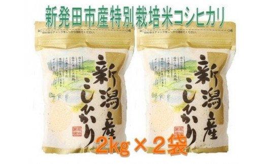 D31 (令和2年米)新潟県新発田市産特別栽培米コシヒカリ(2kg×2袋)