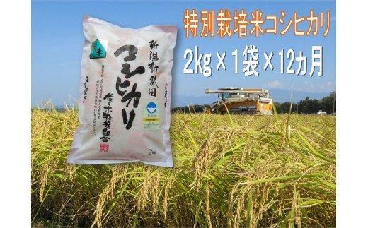 D20【令和2年産】(定期便)特別栽培米コシヒカリ 2㎏×12ヵ月(新潟県新発田市産)
