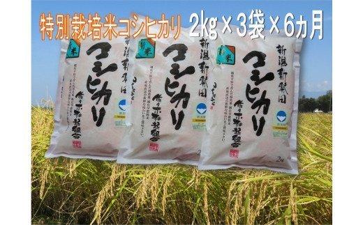 D14【令和2年産】(定期便)特別栽培米コシヒカリ 2㎏×3袋×6ヵ月(新潟県新発田市産)