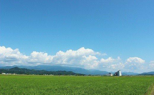 D04 【令和2年産米!】JA北越後コシヒカリ5kg×2袋(特別栽培米)