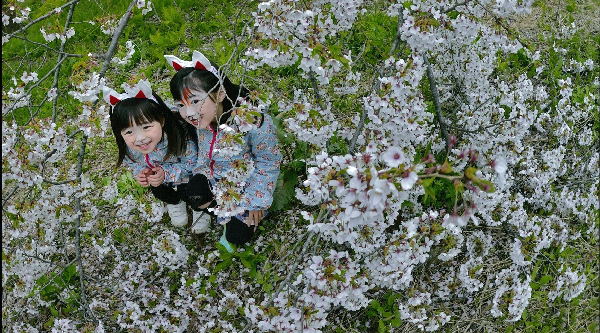 春.桜と子ぎつね