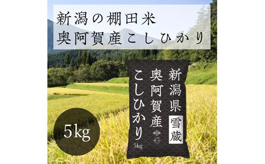 《先行受付・令和3年産米》 新潟県奥阿賀産こしひかり 5kg(1袋)