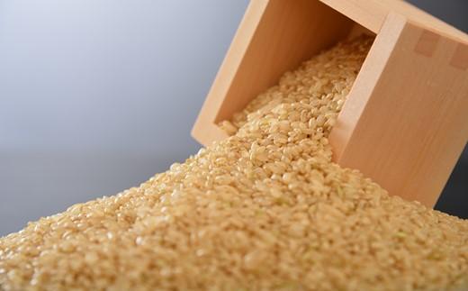 [A078] 【定期便】【令和3年産・新米予約(11月発送開始)】【無農薬】【玄米】能登のこだわり自然栽培こしひかり『羽咋米』 5kg×3回コース