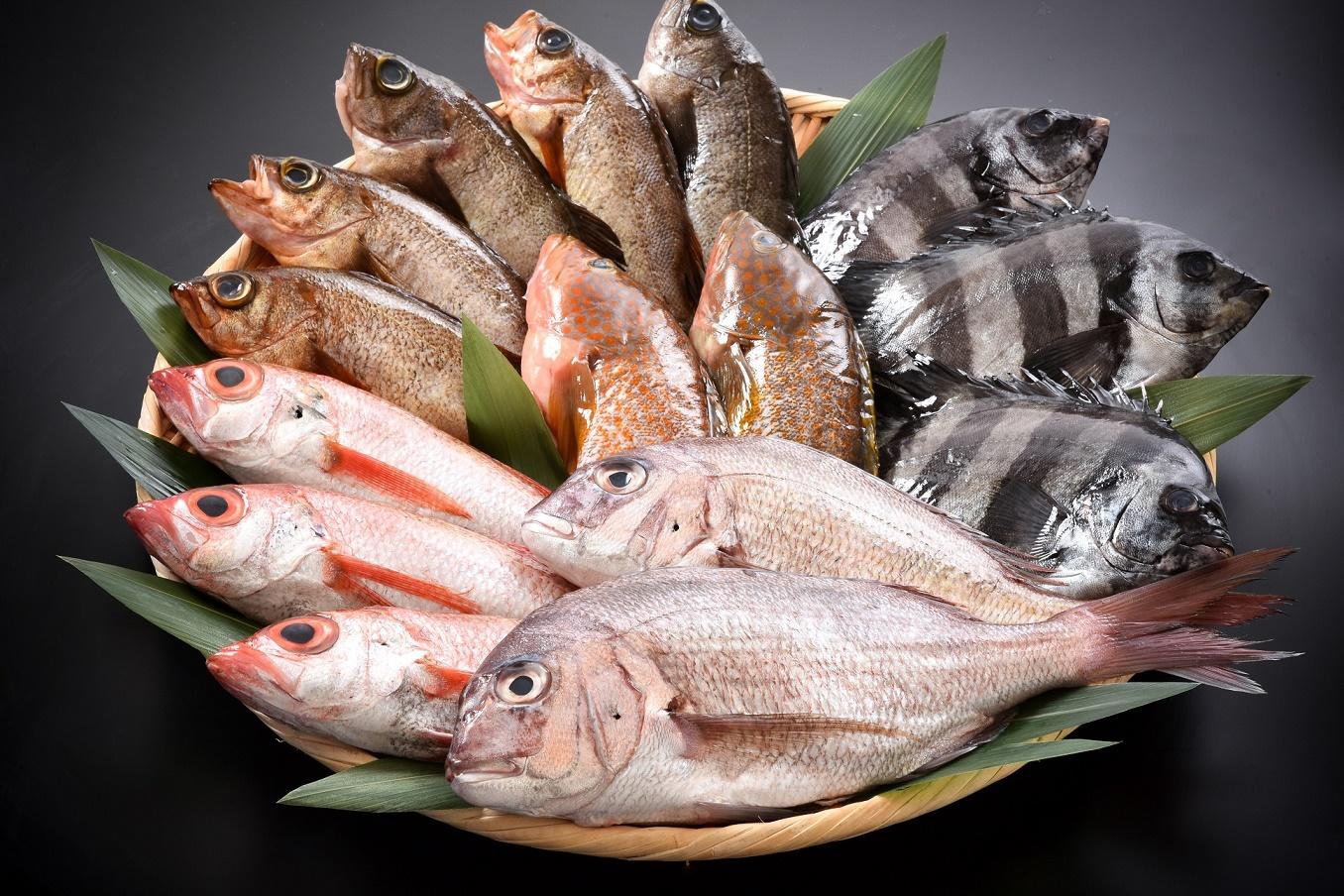 海の幸 脂がのり身の締まった日本海の魚たち