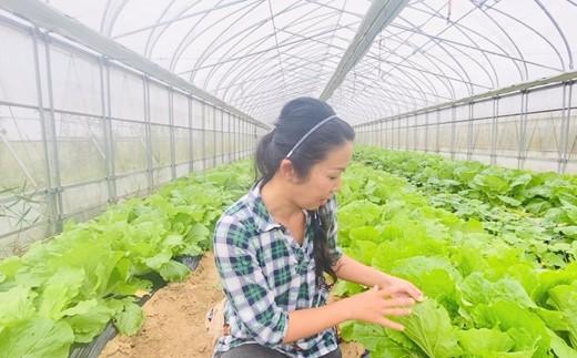 [H034] 自然栽培白菜の無添加キムチ