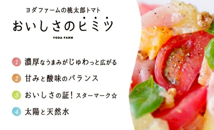 【中央市共通返礼品】トマト 約2kg 予約 送料無料 10月中下旬より順次発送 贈答にも おまけ付き ヨダファーム ジュース ソースにも