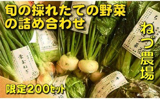 [5839-1219]【3〜4人前】山梨県産:旬の採れたて野菜の詰め合わせ(栽培期間中農薬は使用していません)