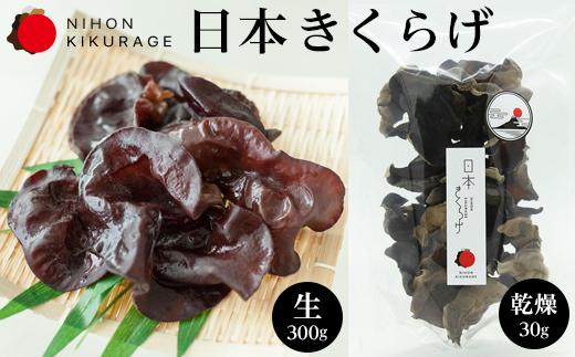 特選 日本きくらげ【富士山】-生(300g)【富士山】-乾燥(30g)