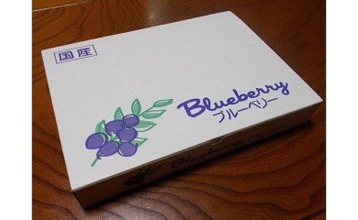 <生産者直送>新鮮朝取り 大粒生ブルーベリー 1kg
