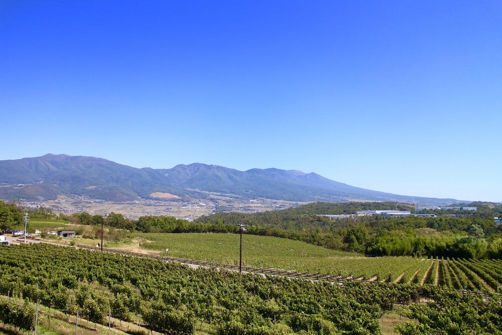 今、ワイン業界が注目する、千曲川周辺ワイナリー