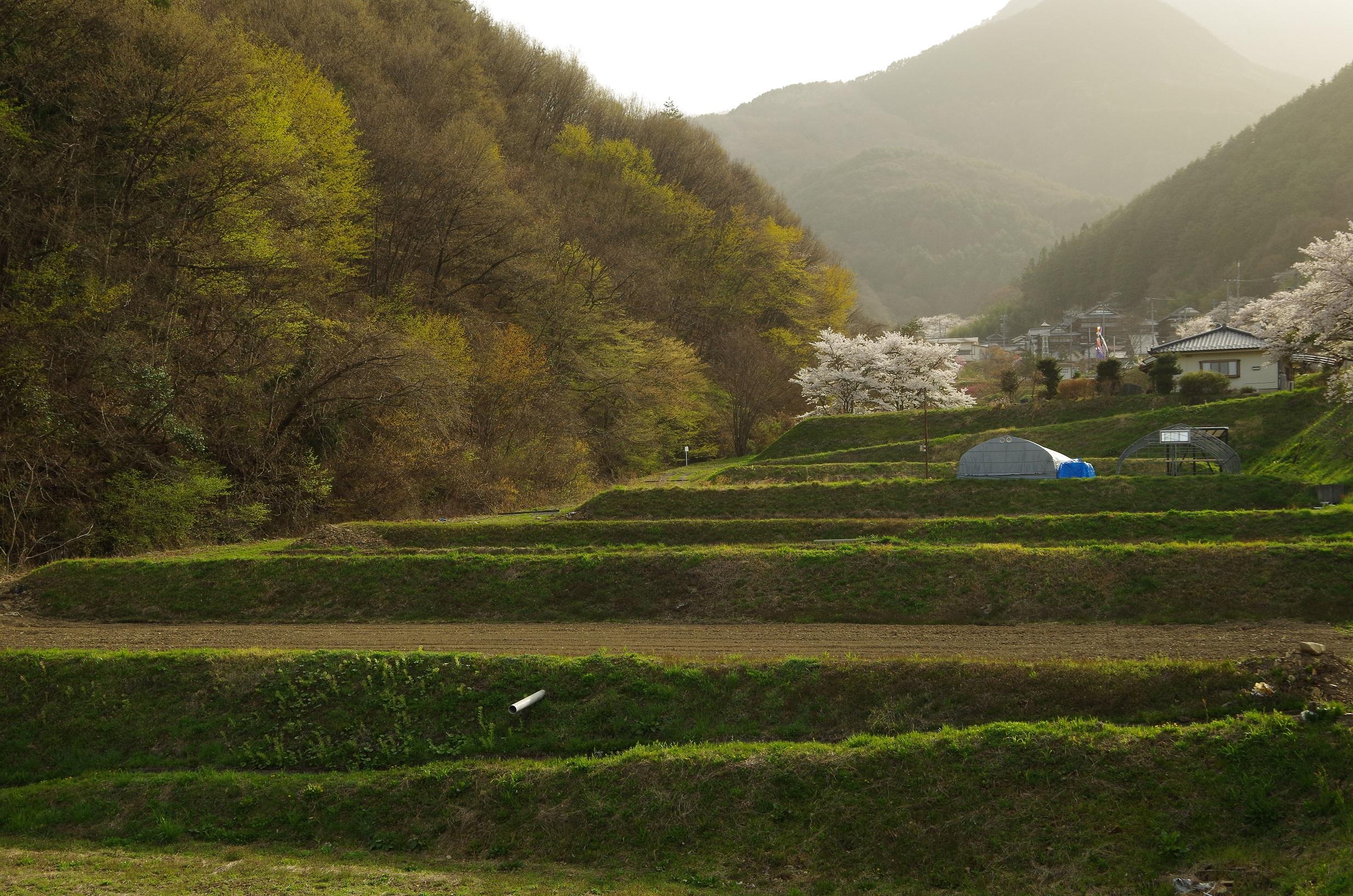 温泉街のふもとに広がる段々畑