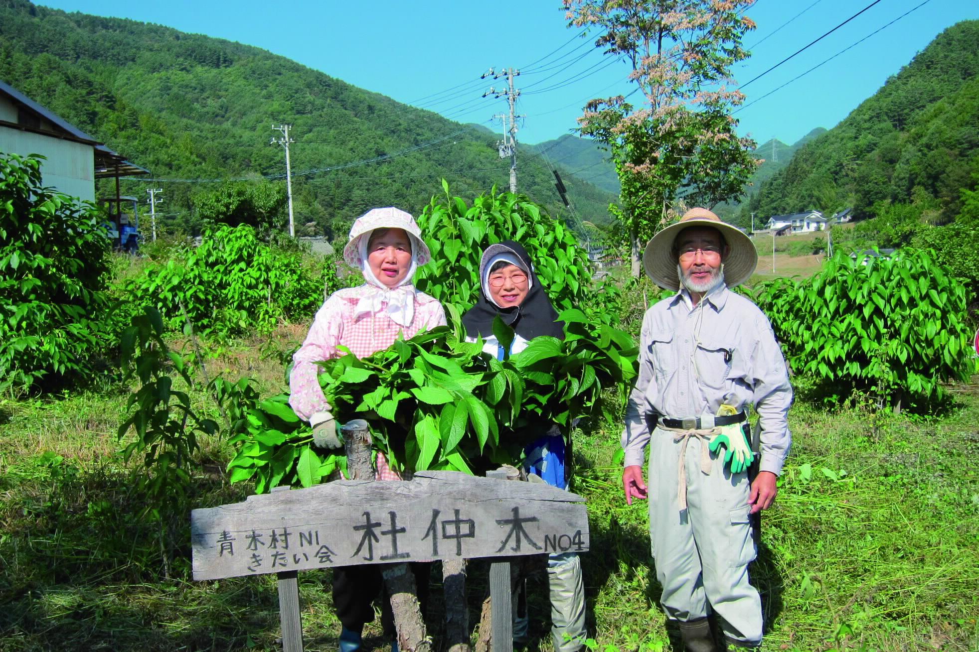青木村特産杜仲葉使用 山里育ち杜仲そば・杜仲茶セット