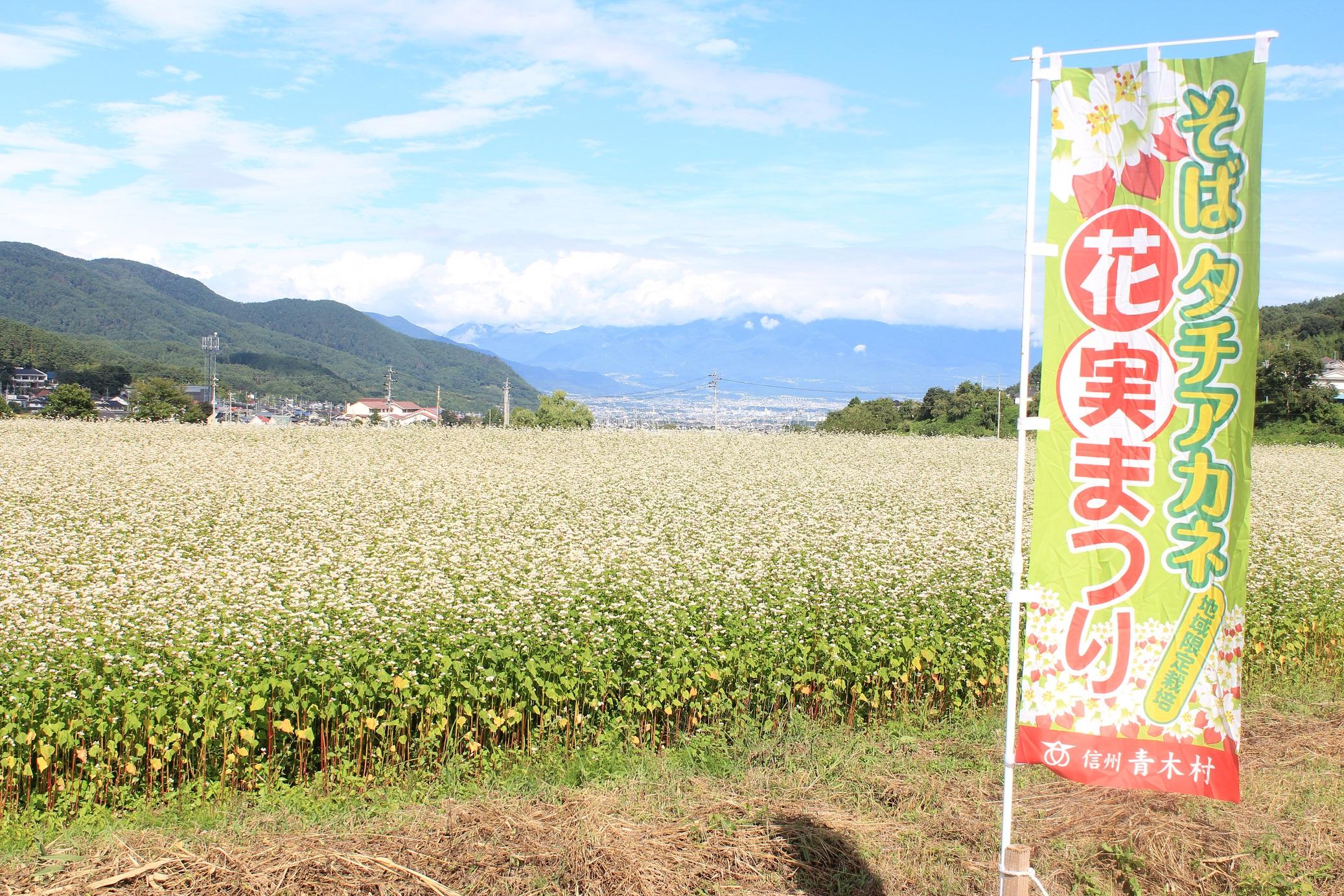青木村限定タチアカネ蕎麦粉(約500g×3袋)