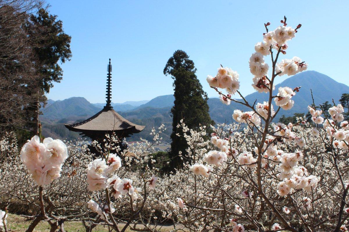 国宝や多くの文化財を有する、長野県有数の古刹