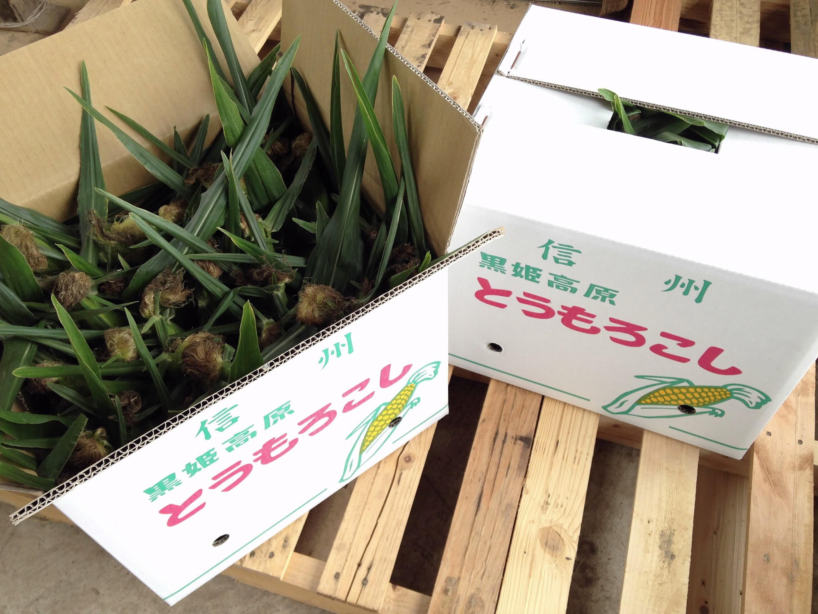 71.小林農園のとうもろこし(サニーショコラ27本+α) 7月から8月中旬まで季節限定