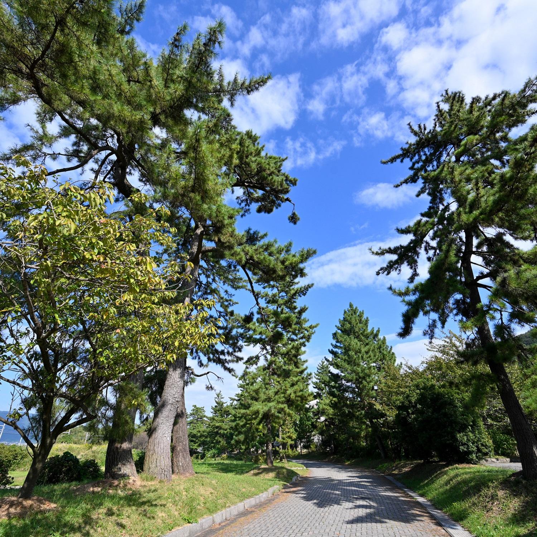 中山道松並木