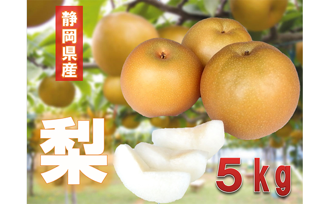 ★8月から発送 静岡県産 志太梨 5kg