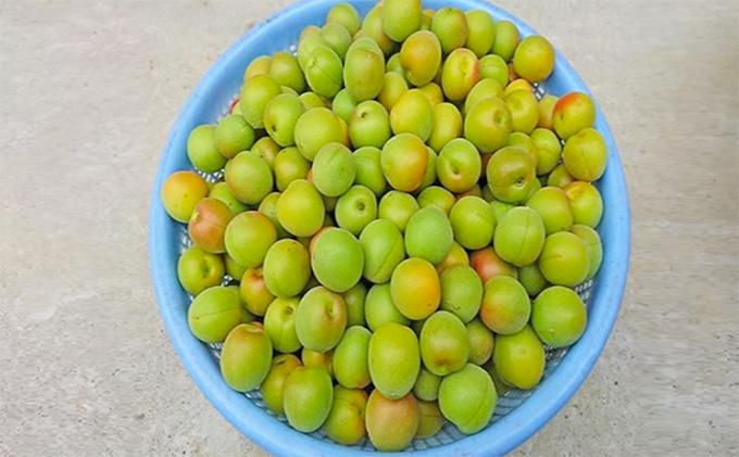 梅(品種 南高梅)梅干し用(6kg)大粒