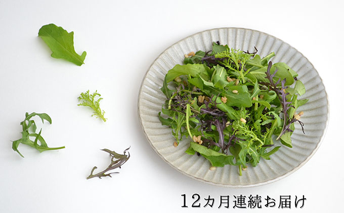 【毎月発送!12ヶ月】ハーブ野菜の詰め合わせ(総量約450g×12回)